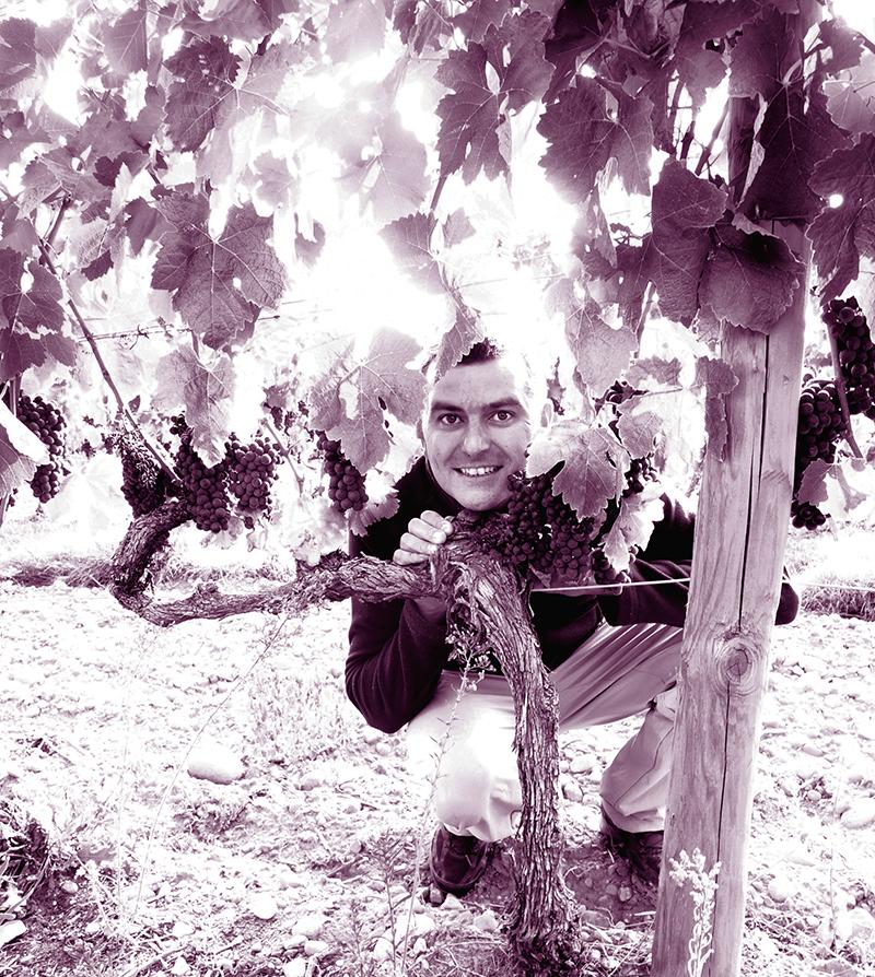 gaylord vigne